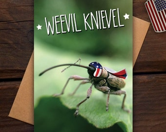 Weevil Knievel - Greeting card - insect, bug, pun, funny, cute, daredevil, get well soon, photography, macro, nature, wildlife, animal