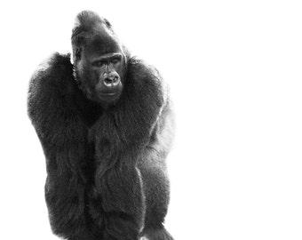 Modern Gorilla Canvas Print // Minimalist Photo // African Art // Baby Gift // Animal Photography // Black and White // Mid Century Modern