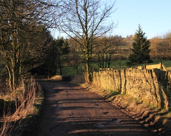 Portrait of a Muddy Bumpy Country Road Leading Off Deep Into The Countryside, Rich Sunlight, Shadows, Trees, Country Lane, Background