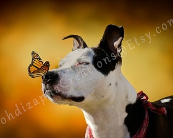 Dog Photography, PitBull Picture, Puppy Portrait Artwork, Wall Art in Canvas, Metal, or Photo Paper Print; The Pit Bull and The Butterfly