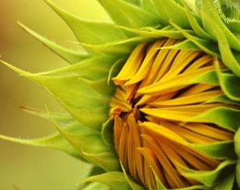 Sunflower Print, Rustic Photography, Farmhouse Decor, Yellow Flower Print, Summer Wall Art