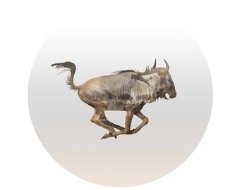 The Wilderbeest Odyssey