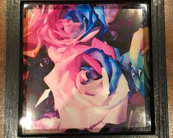 Pastel Rainbow Roses Framed Print