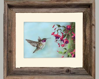Sweet Treat - Hummingbird - Framed- Barnwood