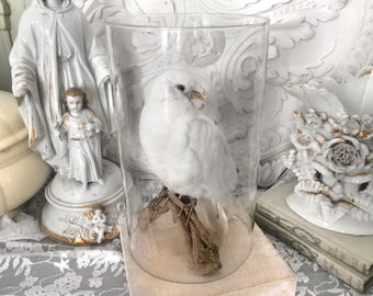 Beautiful white vintage pigeon / Beautiful white dove vintage taxidermy