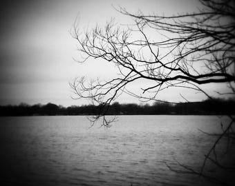 Storm, b&w, tree, lake, water, dead branch, tree
