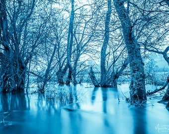 Flooded Tree Smurfs photograph wall art photograph fine art photography decor home decor photograph gallery art large wall art
