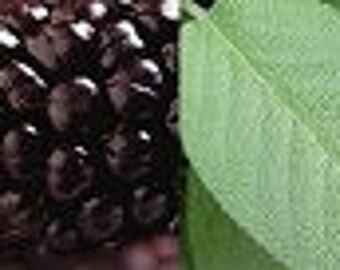 Blackberry Sage Fragrance Oil - Soap fragrance oil - Scents for soap - Soapmaking supplies