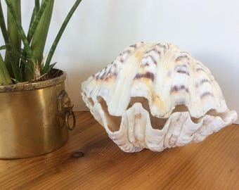 7 inch Clam Shell. Real Giant Clam Shell, Pair / Matching Halves. Large Seashell, Beach Decor. Off White, Purple Brown.