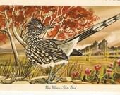 Vintage Bird Postcard, Roadrunner New Mexico State Bird postcard
