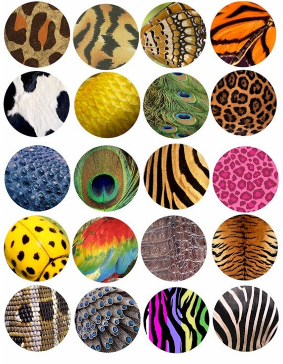 Animal Insect skin textures patterns clip art collage sheet 2 inch circles tiger leopard snake digital download graphics images printables