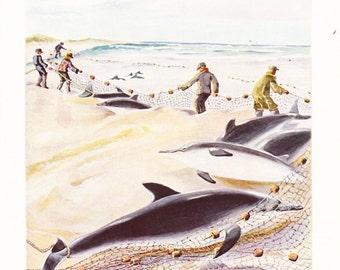 1940s Bottlenose Dolphin Print -  Vintage Antique Animal Zoology Ocean Sea Home Decor Book Plate Art Illustration for Framing