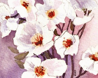"""ACEO """"White Poppies""""  Print of original watercolor"""