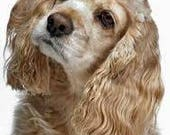 Ginger, a puppy bouquet