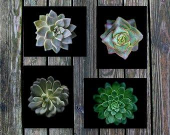 succulent collection, succulents photo, set of 4 art prints, nature pictures, minimal decor, black background, garden fine art, green