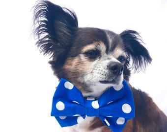 Blue and White Polka Dot Dog Bowtie