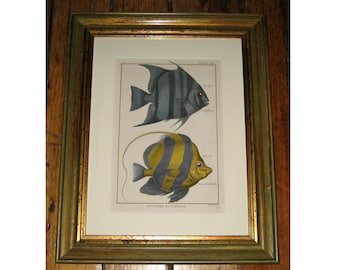c. 1788 TROPICAL FISH FRAMED antique engraving - original antique print - sea life -in green and gold stressed wood frame -  ready to hang