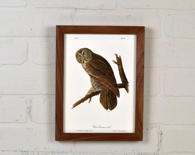 """Framed Audubon Bird Print """"Great Cinerous Owl"""" Full Color Reproduction - Solid Natural Walnut Peewee Style - IN STOCK - Same Day Shipping"""
