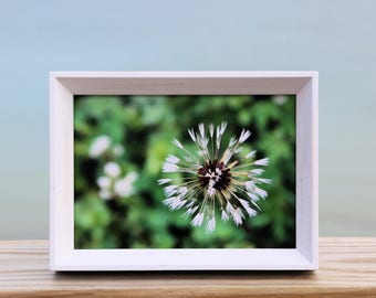 Spring Photo- Wishes, 5x7 print dandelion photo, white frame, green home decor, flower photography, dandy wish, flower art, nature photo art