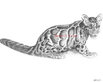 Baby Cloud Leopard pencil drawing 0317 print