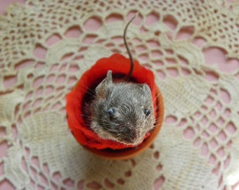 Taxidermy Mouse in a Tiny Miniature Terra Cotta Pot. Isabella.