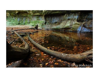 """Fine Art Color Landscape Photography of Starved Rock State Park in Illinois - """"Fallen Trees in St Louis Canyon"""""""