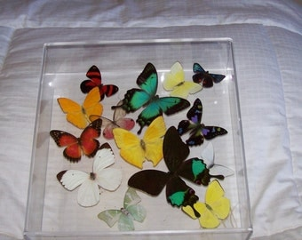 Real Exotic Butterflies Gracefully Arranged in a Beautiful Swarm