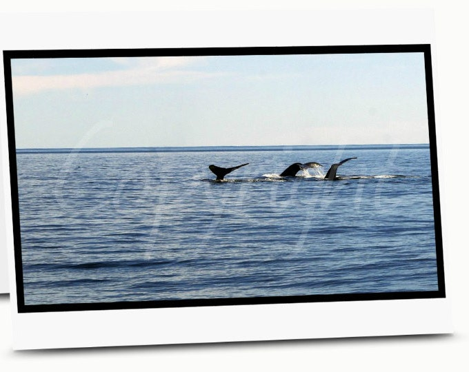 Whale Tails, Humpback Whale, Print or Greeting Card, Coastal, Nautical, Ocean, Photography, Gift Idea, Home Decor, Wall Art, Nature