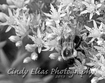Blank Note Card, Greeting Card, Photo Note Card, Flower Card, Bee, Photography, Print, Tiny Flowers, Fine Art Print, BW Photography, Insect