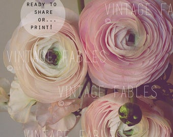 "Social Media Photo, Styled Stock Photo, Instagram, Instant Download Photo, Floral Mockup, Printable Photo, Pink Ranunculus, 8.5"" x 11"""