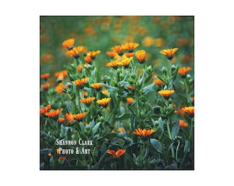 Floral Photography. Orange Wildflowers. Orange and Green Nature Photography. Landscape Art. Spring. Plants. Botanical Photography. Orange