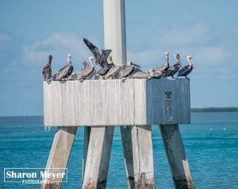 Pelican Print, Fine Art Photo, Wall Decor, Fishing, Pelican Photo, Pelican, Florida Bird Print