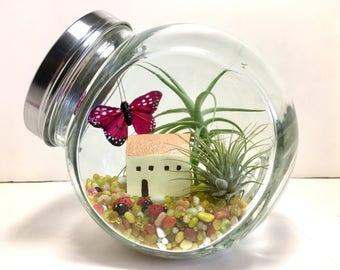 Air Plant Fairy Garden Terrarium, Miniature Garden Decor, Fairy Garden Kit, Fairytale Garden Decor, Fairy Terrarium, Fairy House Decor