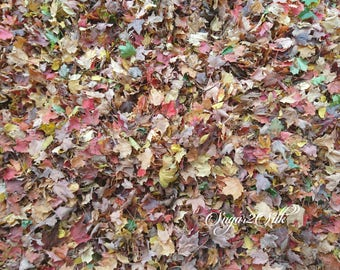 Fall Leaves Multi Colored Red Gold Brown Yellow Print or Backdrop