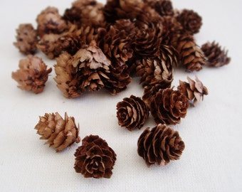 Pine Cones Mini Pine Cones Rustic Wedding Decor Small Pine Cones Vase Filler Table Scatter Hemlock Pine cones