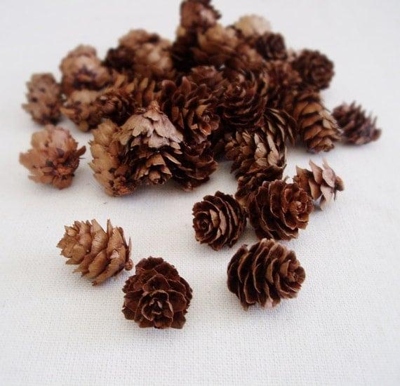Pine Cones Mini Pine Cones Rustic Wedding Decor Small Pine Cones Vase Filler Table Scatter Hemlock Pine cones