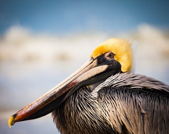 Brown Pelican Photograph, Bird Portrait, Beach Photo, Nature Photography, Florida Wildlife - fine art photograph