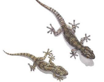Geckos Greeting Card (code TM21)