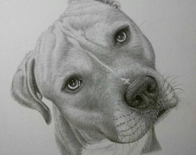Featured listing image: All Sizes~Dog Pencil Portraits & Gift Cards ~ All Sizes ~ Hand-Drawn with Framing Options