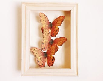 Orange Faux Butterfly shadow box 5x7
