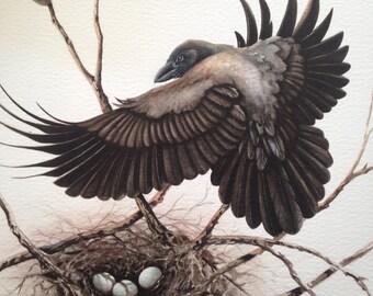 Alala Nest