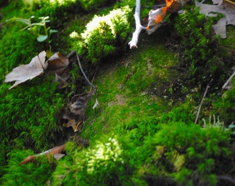 Moss n Leaves
