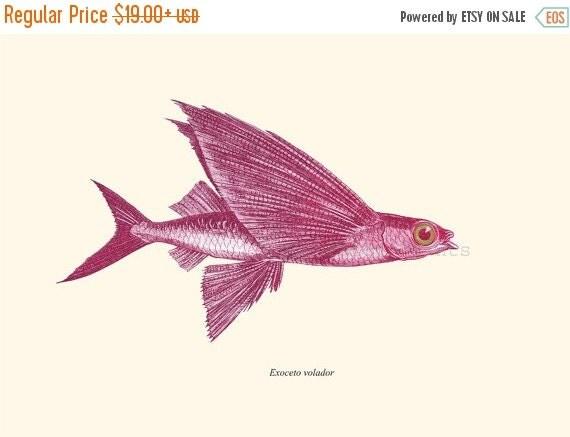 SALE 15% OFF Wall decor  poster  - Vintage Fish Print -  sea life print-   Flying Fish Exocoetus Nautical art