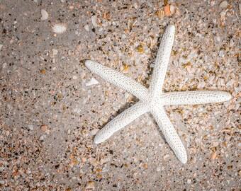 Seashell Photography - Starfish photo, beach ocean photo, Beach Photo, tan, orange shell, sea shell print, coastal seashore, bathroom decor