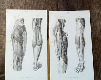 1880 workbook page, elementary and progressive-anatomy, Grays Anatomy Posters Massage Chart Clinic Physical Therapist Doctor Medical