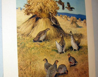 Lynn Bogue Hunt 1944 Game Birds Original Lithograph Print Grouse and Partridge Large Print Field and Stream Company