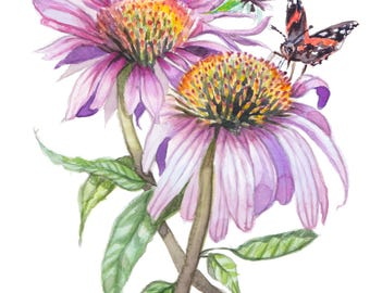 """Echinacea and Butterfly Print 5x7"""""""