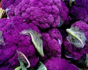100 Purple Broccoli Seeds, Purple Sprouting Broccoli, Unusual Vegetables, Heirloom Broccoli Seeds, Non-gmo Broccoli, Heirloom Vegetable Seed