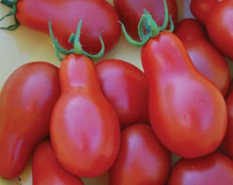 VTCP) RED PEAR Cherry Tomato~Seeds!!!!!!~~~~~~Let the Kids Grow Them!!