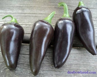 VPPHJ) PURPLE JALEPENO Hot Pepper~Seeds!!!!~~~~~~~Medium Heat!